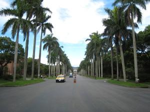 台湾大学のメインロード