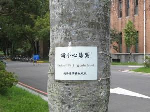 ヤシの木の注意書き
