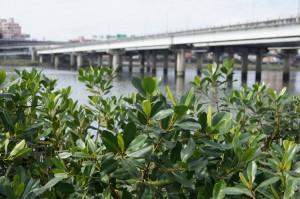 台北大橋をぼかしてみる