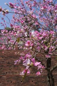 安平古堡に咲く花